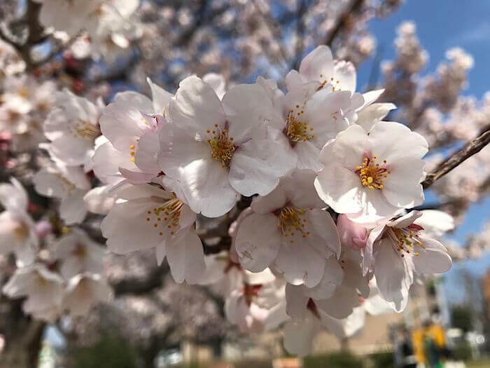 ファイル名の例の、桜の画像